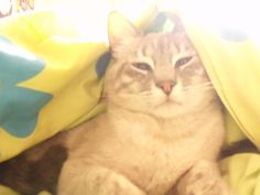 Gato angelical..