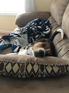 Because I'm the new puppy in the house and I'll lay where I want. http://ift.tt/2twgw1z