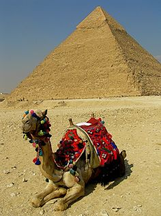 See the pyramids in Egypt and if I ride a camel along the way, that'd be cool too. :)