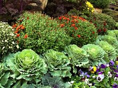 1000 Images About Garden Annuals Fall Winter On 400 x 300