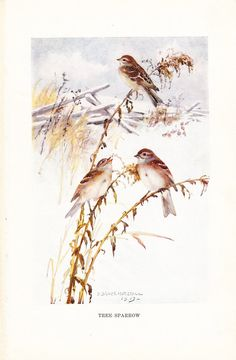 Pinned and purchased! Vintage bird print