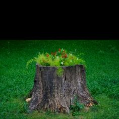 Now I know what to do with the three eyesores in the yard! Or you can use it for a fairy home....