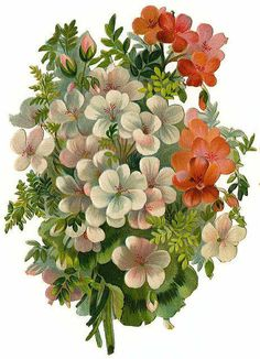 I love the white flowers Decoupage Vintage, Art Vintage, Looks Vintage, Vintage Prints, Vintage Images, Victorian Flowers, Vintage Flowers, Vintage Floral, Retro Flowers