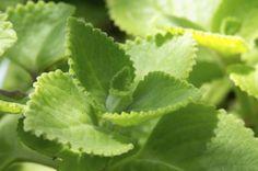 Melhores plantas para atrair dinheiro. Quando se trata de aumentar os nossos rendimentos, são poucas as tentativas para atrair energia positiva e boa sorte. As plantas fazem parte da natureza e sempre tiveram diferentes significados e simb...