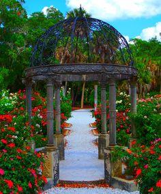 ringling museum sarasota fl mabel's rose garden -