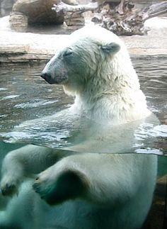Next stop - San Diego Zoo!  Polar Zen, San Diego, CA.