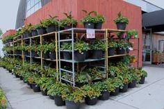 Plants, Products, Flora, Plant, Gadget