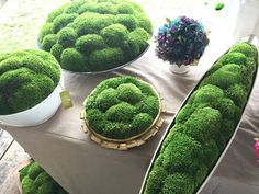 Might want to put some of these moss balls in the base of the glass cylinders if it looks too stem-y. Moss filled planters from Round Top Indoor Planters, Diy Planters, Succulent Planters, Indoor Gardening, Hanging Planters, Organic Gardening, Indoor Cactus, Indoor Herbs, Dish Garden