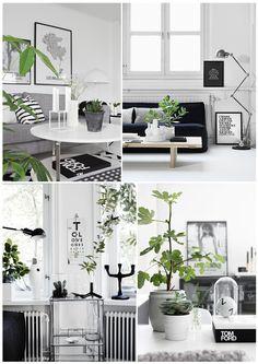 Wohnen in schwarz-weiß wird durch grüne Pflanzen aufgelockert. Dieser Stil ist schon sehr clean und voller Kontraste. Durch natürliches Holz kann das Konzept lieblicher werden!