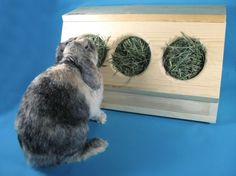 SaveABunny's Three Hole Hay Saver Box by saveabunny on Etsy This is great because they're handmade, safe for the buns, and the proceeds benefit all the buns over at SAB! Rabbit Toys, Bunny Toys, Rabbit Treats, Rabbit Habitat, Bunny Supplies, Rabbit Information, Bunny Cages, Rabbit Cages, Hay Feeder