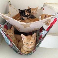 Gatos e cães: abrigos e casas para estes nossos peludinha. Tem no blog http://ift.tt/1t4js9E