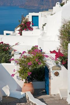 Glorious Flowers of Santorini, Greece