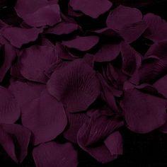 *Petals of Plum*