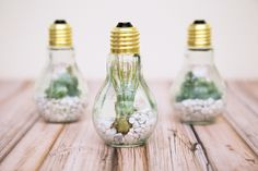 A terrarium with a twist! #DIY #darbysmart
