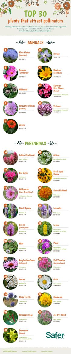 Perennials Top 30 Plants That Attract Pollinators. Attract bees, butterflies and other pollinators with these annuals and perennials. Hummingbird Flowers, Hummingbird Garden, Bee Friendly, Annual Plants, Dream Garden, Planting Flowers, Flowers Perennials, Butterfly Garden Plants, Perennials
