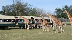 When you visit the Global Wildlife Center, you can  choose to go on a group safari tour, pictured here.