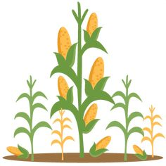 row of corn stalks photo illustration illustrations and corn stalks rh pinterest com corn stalk clipart free free cornstalk clipart