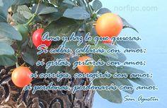 Hazlo todo con amor y vive con amor, pensamiento de San Agustín sobre la vida