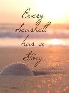 Every seashell has a story. Create your stories at the beach. Visit Inn at the Beach in Venice, Florida Sunset Beach, Ocean Beach, Beach Bum, Beach Vibes, Ocean Quotes, I Love The Beach, Beach Themes, Beautiful Beaches, Sea Shells