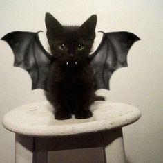 Des animaux déguisés pour Halloween sur http://www.flair.be/fr/lol/308101/des-animaux-deguises-pour-halloween