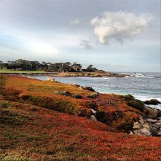 Take a bike ride along the beautiful 17-mile Drive! #PebbleBeach #17MileDrive