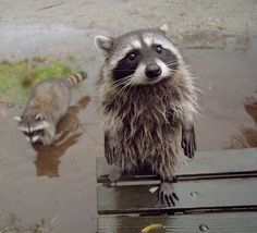 can i come in? Its rainy out!