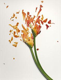 Flowers in liquid nitrogen