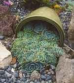 Landscaping Ideas gardens