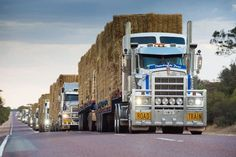 A convoy of 47 road trains carrying 3000 tonnes of donated hay from WA bound for drought-affected NSW farmers. Supplied by Farmers Across Borders Australia Living, Western Australia, Australia Travel, Train Truck, Road Train, Farm Trucks, Big Trucks, Meanwhile In Australia, Kenworth Trucks