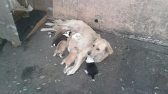 Петиция · Fernando De Andreis: Public Hospital Veterinarian and Animal Shelter Public · Change.org