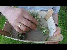 Como obtener semillas zahanoria de manera facil