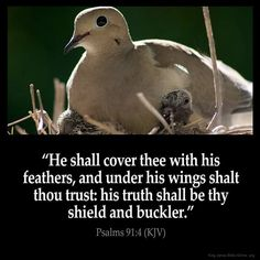 He shall cover thee with his feathers, and under his wings shalt thou trust: his truth shall be thy shield and buckler. – Psalms (KJV) from King James Version Bible (KJV Bible) Bible Verses Kjv, King James Bible Verses, Biblical Quotes, Bible Quotes, Bible Psalms, Prayer Scriptures, Prayer Quotes, King James Bible Online, Bible King James Version