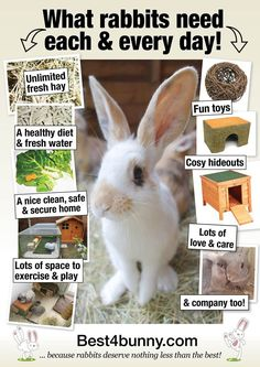 What rabbits need each & every day! http://www.best4bunny.com
