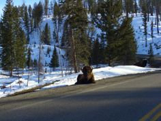 The Bison, just chilling by the road as you drive by trying to lift your jaw up :-O