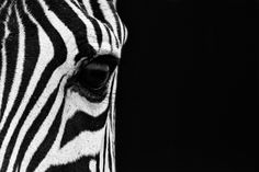 """Zebra Eye"" by Mario Moreno, via 500px."