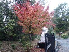 Lafayette, California, Autumn 2012.