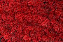 Znalezione obrazy dla zapytania róże
