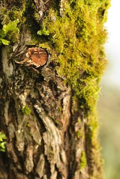 Stock image of 'Close up tree bark with moss. Shallow DOF'