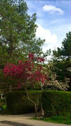 #metu #nature #color #pink #white #clouds #bicycle