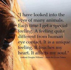 I have looked into the eyes of many animals. Each time I get a special feeling. A feeling quite different from human eye contact. It is a unique feeling. It touches my heart. It affects my soul. Anthony Douglas Williams~Inside the Divine Pattern Yorkies, Animal Lover Quotes, Equestrian Quotes, Horse Quotes, Horse Sayings, Cat Quotes, Funny Quotes, Think, All Nature