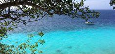 Holland Announces Shark Sanctuaries in the Dutch Antilles - Scuba Diver Life