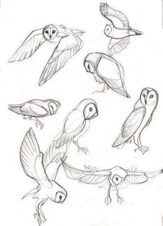 40 kostenlose und einfache Tierskizze, Ideen und Inspiration beim Zeichnen - Drawing Tips easy animals to draw Drawing Poses, Drawing Tips, Drawing Reference, Drawing Sketches, Drawing Ideas, Anatomy Sketches, Drawing Drawing, Learn Drawing, Drawing Studies