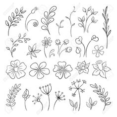 Doodle elements of Flowers, buds, leaves. Stock Vector - 31449944