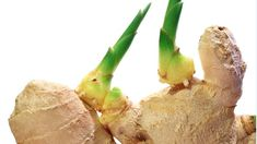 Superknolle Ingwer: Nicht kaufen, sondern ganz einfach selbst vermehren Ginger is healthy and can be used in many different ways. Instead of buying expensive bulbs again and again, you can easily grow Potted Plants Patio, Garden Plants, Plants You Can Regrow, Growing Vegetables In Pots, Regrow Vegetables, Planting Vegetables, Super Bubbles, Grow Your Own Food, Plantation