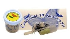 5 Live Caterpillars Shipped Now- Butterfly Kit Refill  Order at http://www.amazon.com/Live-Caterpillars-Shipped-Butterfly-Refill/dp/B00B7PP7WI/ref=zg_bs_166269011_14?tag=bestmacros-20