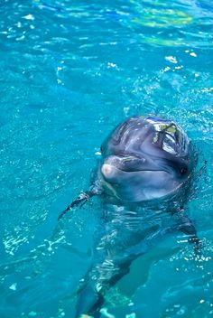 For Little Miss C. But loving that S. always tells me how she will be riding dolphins with Little Mr. C soon. Loving that. Soon. - Stop the Dolphin Slaughter NOW