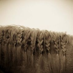 Horse Braids!  I saw a beaut of a horse at the stables with braids just like this, they were longer though, much longer.