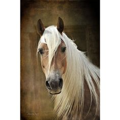 Pin by Kasia Czyszczon on Horses | Pinterest ❤ liked on Polyvore featuring jewelry, brooches, pin jewelry, pin brooch, horse jewellery, horse jewelry and horse brooch