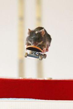 Mice... Skateboarding!