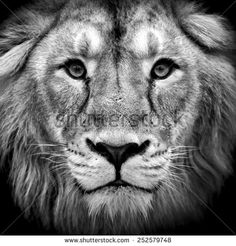 Lion Head Stock Photos, Images, & Pictures | Shutterstock